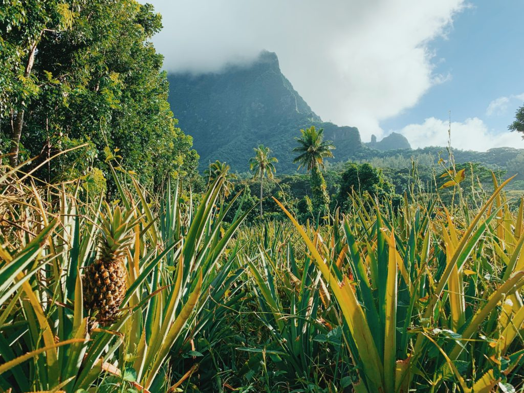 Moorea Travel Guide