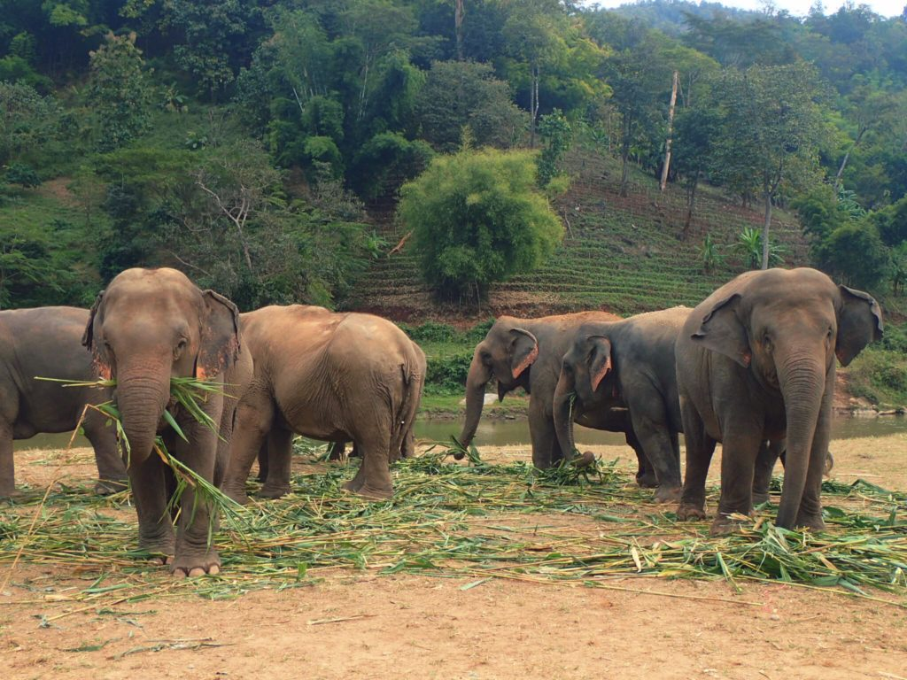 Animal Tourism in Thailand: Elephants, Tigers, and Monkeys