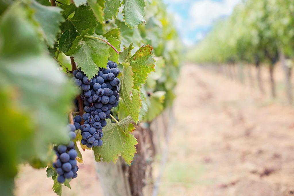 Wine Tasting in Calistoga CA